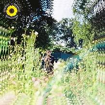 Sunflower [Explicit]