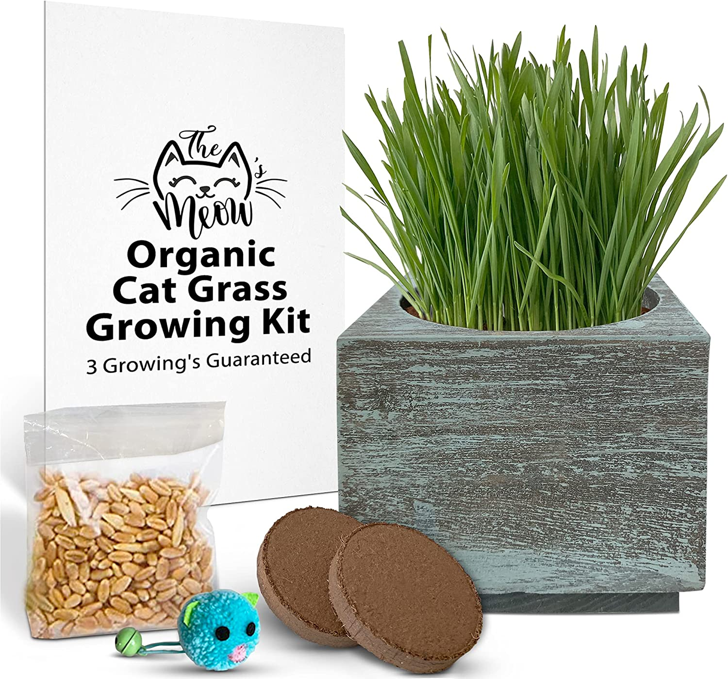 latest Organic Cat Grass Seeds Kit - Direct stock discount Seed for 3 Growing' Soil