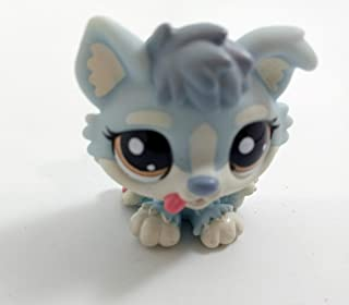 Husky Puppy #1683 (Blue) Littlest Pet Shop (Retired) Collector Toy - LPS Collectible Replacement Single Figure - Loose (OOP Out of Package & Print)