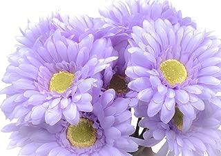 Best lavender gerbera daisy Reviews