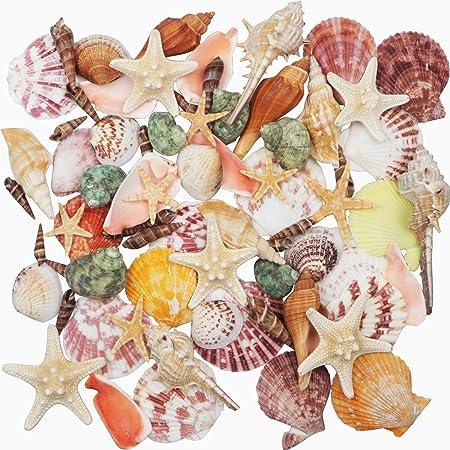 Coquillages 9 Sortes Mixte Océan Plage Coquillages 2 Sortes Étoile de mer, 3-9 CM Coquillages Colorés Naturels Étoile de mer Parfait pour les Décorations de mariage pour fêtes à thème à la plage