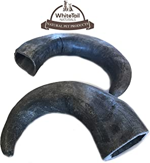 WhiteTail Naturals Water Buffalo Bully Horn (2 Pack Large) All-Natural Dog Chew and Training Treat | High Protein, Low Fat, Grain Free | Promotes Dental Teeth and Gum Health