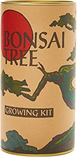Bonsai Tree (Flowering Japanese Cherry Blossom) | Seed Grow Kit | The Jonsteen Company