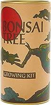 Best joshua tree bonsai Reviews