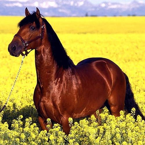Super Speed Pferd