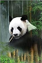 Hoffman Fabrics Hoffman Digital Call of The Wild 30'' Panda Panel Waterfall Fabric
