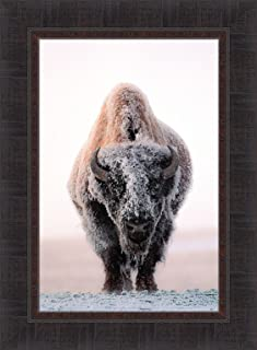 Best buffalo in snow pictures Reviews