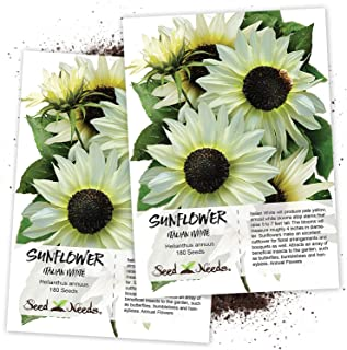 Seed Needs, Italian White Sunflower (Helianthus annuus) Twin Pack of 180 Seeds Each