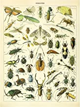 Meishe Art Vintage Poster Print Insects Identification Reference Chart Species Collection Entomology Diagram Classroom Club Wall Decor