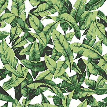 Amazon Com Roommates Tropical Palm Leaf Peel And Stick Wallpaper 20 5 X 16 5 Feet Green Rmk11045wp Home Improvement