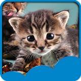 Nette Katzen Live Wallpapers