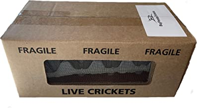 500 Live Acheta Crickets (Small (1/4