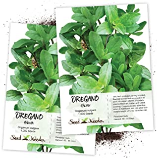 Seed Needs, Italian Oregano Herb (Origanum vulgare) Twin Pack of 1,000 Seeds Each Non-GMO
