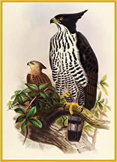 Orenco Originals Blythes Hawk Eagle Naturalist Gould Birds Counted Cross Stitch Pattern