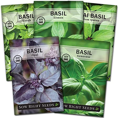 Sow Right Seeds - Basil Seed Collection for Planting - Genovese Sweet, Greek, Opal, Thai, and Lemon Basil - Non-GMO Heirloom Seeds - Instructions to Plant Indoors or Outdoor - Great Gardening Gift