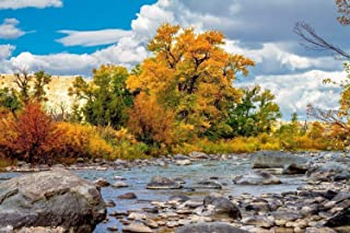 Fall Color Photography Art Print - Picture of Autumn Leaves on Trees Along Wind River in Wyoming Western Landscape Decor 5x7 to 30x45