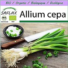 SAFLAX - Ecológico - Cebolla de primavera - Cebolla de