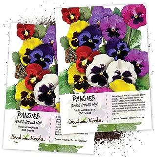 Seed Needs, Swiss Giants Pansy (Viola wittrockiana) Twin Pack of 600 Seeds Each