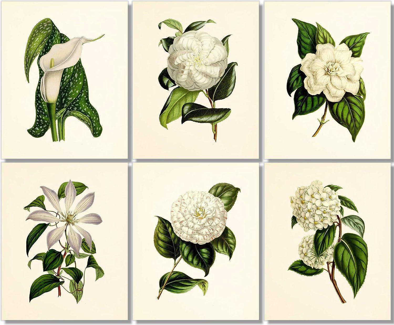 Flower Wall Art - Vintage Floral 6 Set Unfra Limited Denver Mall time trial price of 8x10 Decor
