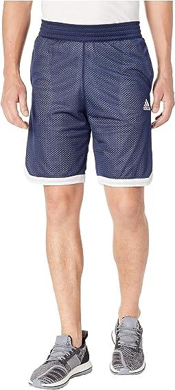 Sport Mesh Shorts