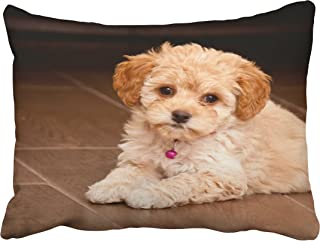 Musesh baby maltese poodle mix or maltipoo puppy dog Cushions Case Throw Pillow Cover For Sofa Home Decorative Pillowslip Gift Ideas Household Pillowcase Zippered Pillow Covers 20x26Inch