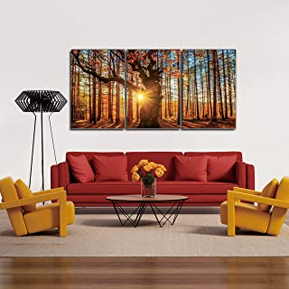 Chic Home Decor Botanical Forest 3 Piece Set Wall Art Gigclee Print Modern Multi color Photographic Sunrise in The Woods Scene, 20