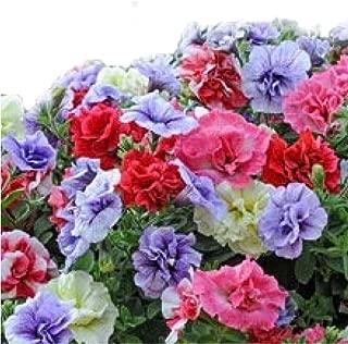 Tumbelina Basket Mix Hanging Petunia Seeds UPC 695928806737 +1 Plant Marker (500)