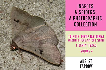 Insects & Arachnids: A Photographic Collection: Trinity River National Wildlife Refuge -  Visitors' Center: Liberty Texas - Volume 4 (Arthropods of Liberty Book 5) (English Edition)