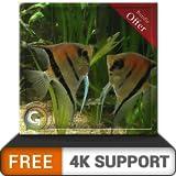 Acuario de peces en pareja gratis HD: disfruta del romance de los peces en tu televisor HDR 4K, televisor 8K y dispositivos de fuego como fondo de pantalla, decoración para las vacaciones de Navidad,