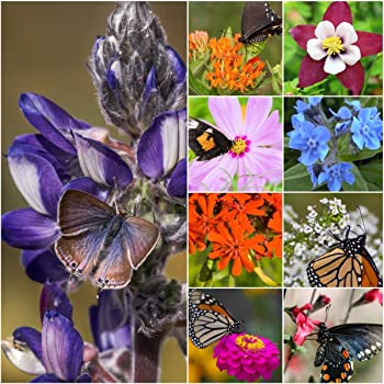 Package of 30,000 Seeds, Bird and Butterfly Wildflower Mixture (100% Pure Live Seed) Non-GMO Seeds by Seed Needs