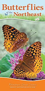 Butterflies of the Northeast: Identify Butterflies with Ease