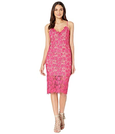 Bardot Tayla Lace Dress (Beetroot) Women