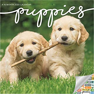 Puppies Calendar 2020 Set - Deluxe 2020 Puppies Mini Calendar with Over 100 Calendar Stickers (Dog Puppies Gifts, Office Supplies)