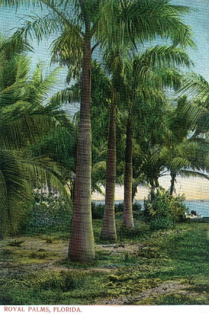 Florida View of Royal Palms 24x36 Print D lowest Popular brand in the world price Gallery Wall Giclee