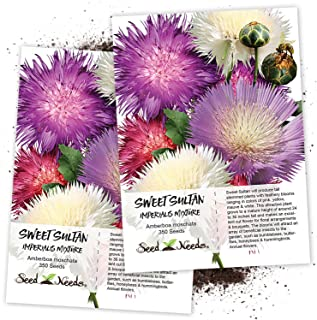 Seed Needs, Sweet Sultan Imperialis Mixture (Amberboa moschata) Twin Pack of 350 Seeds Each