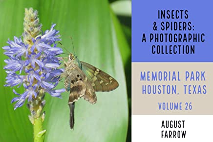 Insects & Arachnids: A Photographic Collection: Memorial Park: Houston Texas - Volume 26 (Arthropods of Memorial Park) (English Edition)