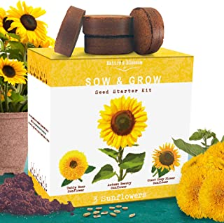 Nature's Blossom Sunflower Growing Kit - Grow 3 Different Sunflowers from Organic Seed. A Complete Beginner Gardeners Growing Set to Start Your Own Indoor Flower Garden at HOM
