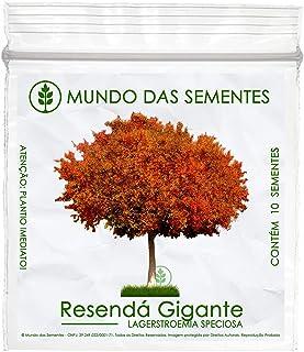 10 Sementes de Resedá Gigante (Outono) - Lagerstroemia speciosa
