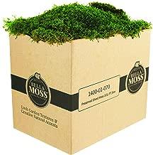 Bella Moss 140001070 Preserved Sheet Box Moss, Green