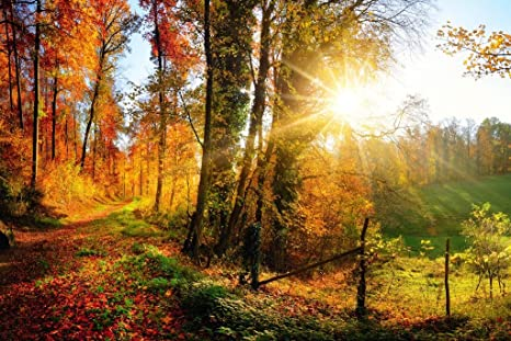 Gorgeous Forest Autumn Fall Leaves Seasons Changing Nature Landscape Panorama Photo Cubicle Locker Mini Art Poster 12x8 Posters Prints