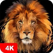 Amazon Com Lion Wallpaper