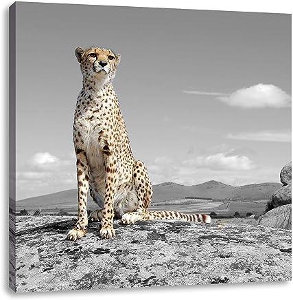 stolzer Gepard auf Wiese schwarz//weiß Leinwandbild Wanddeko Kunstdruck