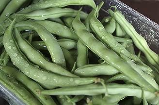 Strike Bush - Bean Seeds - Non-GMO - 2 Ounces