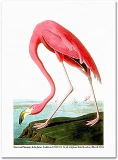 American Flamingo 1834 Artwork by John James Audubon, 24 by 32-Inch Canvas Wall Art