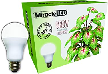 Best plant bulbs for gardens