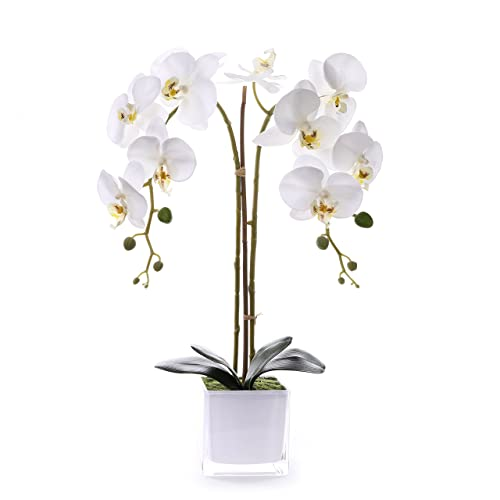 Orchid Centerpiece Decor Amazon Com