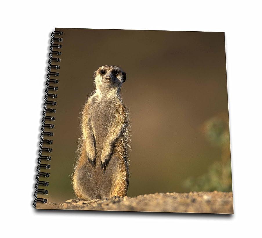 3dRose db_73460_1 Namibia, Keetmanshoop, Meerkat, Mongoose, Namib Desert-AF31 PSO0066-Paul Souders-Drawing Book, 8 by 8-Inch