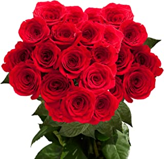 GlobalRose 2 Dozen Red Roses- Fresh Cut Flowers- Guranteed Delivery