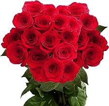 2 dozen roses cheap
