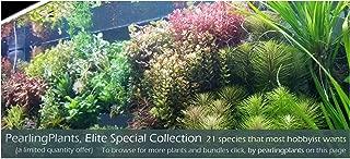 Elite Special Collection, Freshwater Live Aquarium Plants
